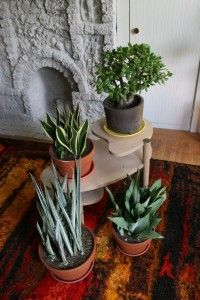 use vintage side table (layered) for plants stand