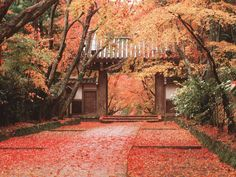 The gate of a temple and autumnal leaves