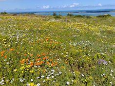 Beach Holiday, Cape Town, Vineyard, Van, Mountains, Summer, Travel, Outdoor, Beautiful