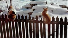 The latest snow - Paltinoasa - North Romania Romania, Snow, Animals, Animales, Animaux, Animal, Animais, Eyes, Let It Snow