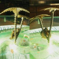 Dino abbraccia palme!☺