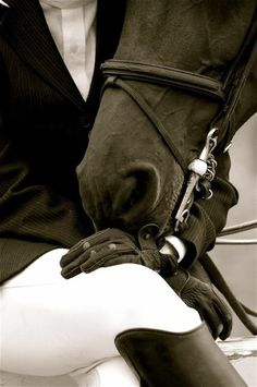 Horse and Rider  Horses could kill humans if they wanted to, but instead they choose to love them.