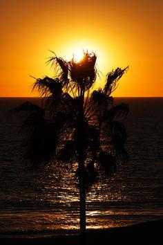Californian Palm Tree Sunset
