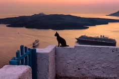 Black Cat and Santorini Caldera (Greece) by David Kamm on 500px #cats #travel #photography