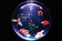 Welcome to Smart Aquarist, your source for all things about aquarium and fish tank. We're dedicated to giving you the very best information in aquarium and fish tank, with focusing on How To, DIY and Guides. Aquarium Design, Aquariums, Colores Art Deco, Conception Aquarium, Cute Pet Names, Hamsters, Photos Of Fish, Fish Tank Lights, Betta Tank