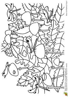 Coloriage cache cache feuilles libellules sur Hugolescargot.com - Hugolescargot.com