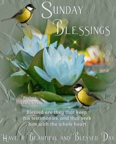 Blessed Sunday Messages, Blessed Sunday Morning, Good Morning Sunday Images, Sunday Wishes, Have A Blessed Sunday, Sunday Pictures, Good Morning Images Flowers, Blessed Friday, Good Morning Sunshine Quotes
