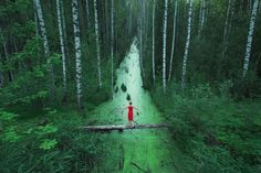 The 100 best photographs ever taken without photoshop - Forests without end, Russia