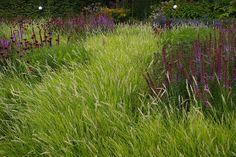 Piet Oudolf - Autumn Moor Grass (Sesleria autumnalis) with Salvia.