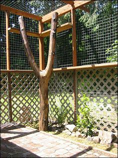 This would work along the west fence where the weird walnut tree is already. fantastic cat enlosure, with details ---- The Wyndabbey Cattery, Part The Design and Construction Of Our Outdoor Enclosures Cat Habitat, Outdoor Cat Enclosure, Cat Cages, Photo Chat, Cat Room, Outdoor Cats, Space Cat, Animal Projects, Catio