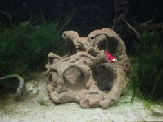 Loch Felsen - Höhle - Deko - Aquarium - Krebse - Fische - Garnelen