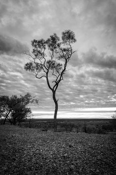 A silhouette of a tree with a stormy sky in the background in Outback Australia