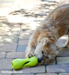Keep Your Pooch Pleasantly Puzzled with the Qwizl Dog Treat Toy #sponsored review & feature