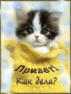 Cutest Teacup Kittens one Cute Animals Love Images plus Draw So Cute Animals Coloring Pages; Cute Animals Sleeping Gif because Cute Cartoon Animals With Big Eyes Coloring Pages Cute Kittens, Kittens And Puppies, Fluffy Kittens, Tiny Puppies, Ragdoll Kittens, Tabby Cats, Bengal Cats, Kittens Cutest Baby, Pretty Cats