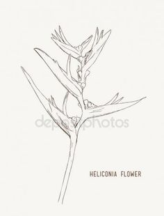 depositphotos_161785862-stock-illustration-heliconia-flowers-wild-plantain-lobster.jpg (342×450)