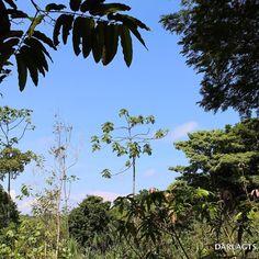 No hay mejor combinación que el verde de los árboles y el azul del cielo.  There's no better combinación than the green of the trees and the blue from the sky.  Bocas del Toro Panamá.  #bocasdeltoro #bastimentos #naturaleza #ecoturismo #nature #ecotourism