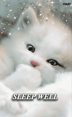 57 Ideas Funny Good Morning Pictures Scary For 2019 Good Night Cat, Cute Good Night, Good Night Sweet Dreams, Good Night Image, Good Night Greetings, Good Night Wishes, Good Night Quotes, Cute Baby Cats, Cute Little Animals