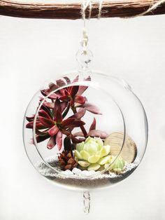 Beach Hanging Glass Bubble Succulent Sand Terrarium
