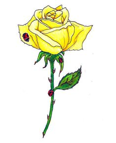 Cute yellow rose with lady bugs. Rose Drawing Tattoo, Tattoo Drawings, Cat Tattoo, Flower Tattoo Designs, Flower Tattoos, Rose Images Hd, Rose Zeichnung Tattoo, Tribal Animal Tattoos, Yellow Rose Tattoos