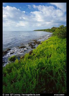 Saltwarts plants on outer coast, morning, Elliott Key. Biscayne National Park (color) American National Parks, Us National Parks, Florida Sunshine, Sunshine State, Biscayne National Park, Mangrove Forest, Key Biscayne, Gulf Of Mexico, Hot Springs