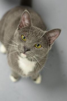 Furkids rescues hundreds of homeless cats each year, including many kittens, that are in need of caring, lifelong homes.