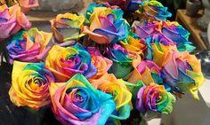 Rosas de Arco-íris: conheça o segredo delas e aprenda a fazer uma para você #Amazing  #Coloured #Flower