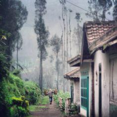 Tengger. Taman Nasional Bromo Tengger Semeru. East Java, Indonesia