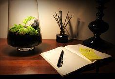 My living lamp Terrarium Terrarium, Diffuser, Green, Terrariums