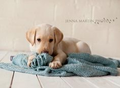 puppies puppy dog photography pets