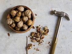 wild hickories, whose nuts are ideal for all kinds of holiday dishes. Here's how to find, shell, and use these fresh raw nuts from the wild.