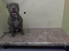 TO DIE 10/22. NYC. ANGEL-M PIT MIX 4 http://YR.ACTIVE.FINE W/KIDS & STRANGERS.PRETTY. https://m.facebook.com/story.php?story_fbid=891548824191331&id=152876678058553…