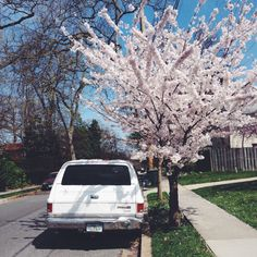 // Spring in Washington, D.C. // Photographed by Alexandra E Haniford