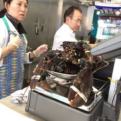 Some very large lobsters spotted at Eddie's #fishisthedish just need #champagne