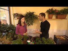 Pěstování bylinek v domácích podmínkách - YouTube Veronica, Aquarium, Plants, Youtube, Aquarius, Fish Tank, Flora, Plant, Planting