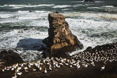 A collection of photos from a windy day watching the Muriwai Gannet colony. Country Lifestyle, Windy Day, Photo Diary, Day Hike, Winter Travel, Still Image, Auckland, Weekend Getaways, Colonial