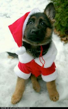 German Shepherd Puppy Santa