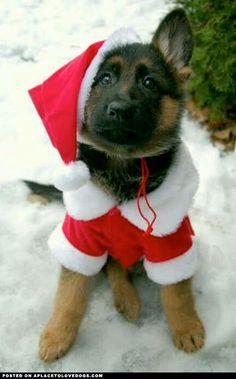 German Shepherd Puppy Santa