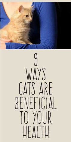 Cats are great therapists! 9 Ways Cats Are Beneficial To Your Health Crazy Cat Lady, Crazy Cats, Cat Plants, Secret Life Of Pets, All About Cats, Cat Health, I Love Cats, Cats And Kittens, Cat Lovers