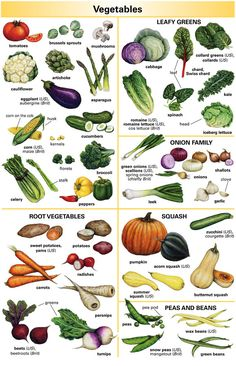 vegetable picture dictionary