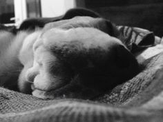 Sleepy head by Sima Loredana