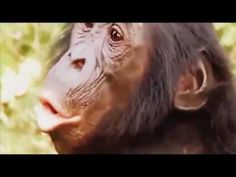 Monkey breeding with different syles  18+