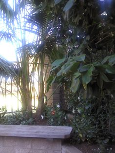 """It looks so much like paradise, but it's actually our back yard. The kentia palm adds a huge amount of """"tropical"""" to our now very tropical backyard—and it's not on Kauai!"""