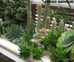Cactus collection, Rio Botanical Garden BOTANICA POP 2013