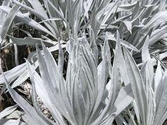 Nevado del Ruiz. Manizales, Colombia Plants, Places, Plant, Planets