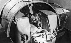 La triste historia de la perra Laika, el primer ser vivo en órbita en el espacio http://www.elconfidencial.com/alma-corazon-vida/2014-11-08/sabia-que-le-quedaba-poco-de-vida-la-triste-historia-de-la-perra-laika_435273/…