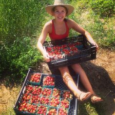 UNH student Olivia Hastings enjoys picking fresh strawberries in Walpole, NH!