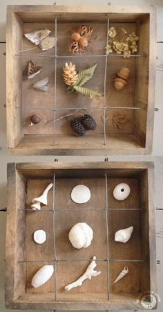 As long as I can remember, I am fascinated by cabinets of curiosities