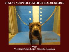 Plse share for fosters and sponsors. Briggs 071816 (AAVA)