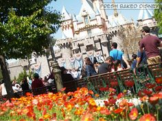 Disneyland Hub for Easter.