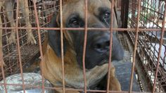 Boycott All International Conferences in South Korea - Nation of Heinous Cruelty and Shameful Apathy!